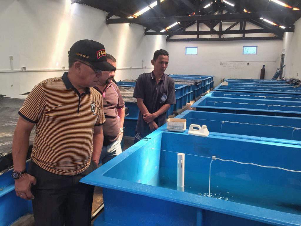Keterangan foto : Bupati Lingga H. Alias Welli melakukan kunjungan ke balai benih ikan di desa Penghujan-Bintan untuk melihat pengembangan bibit Kerapu Centang